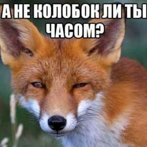 Melek_Anyta