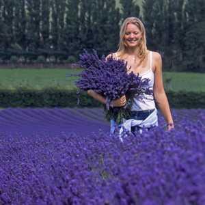 Violet Liliia