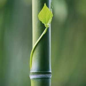 Bambus Welten