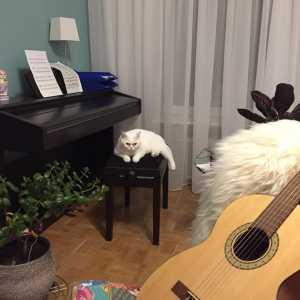 Musikkatze