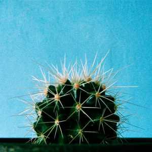 kaktuswelcome